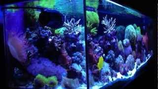getlinkyoutube.com-After 2 Years: jmadden184's Reef
