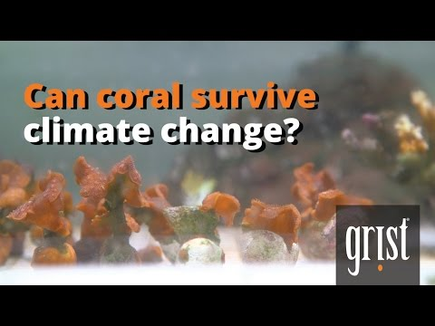 Can coral survive climate change?