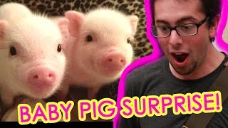 getlinkyoutube.com-Guy Gets Surprised With Tiny Pigs