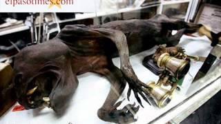 getlinkyoutube.com-Os animais mais estranhos do mundo