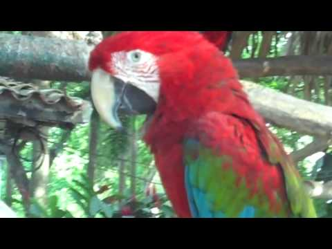 Guacamayas 720p