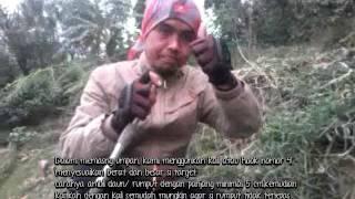 getlinkyoutube.com-Teknik Mancing NIla Menggunakan Rumput