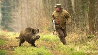 getlinkyoutube.com-Excellent hunting for wild boar. video collection of good shots