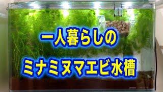 getlinkyoutube.com-〔HD〕一人暮らしのミナミヌマエビ水槽