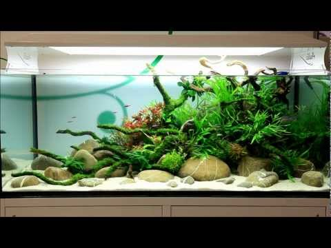 Just Aquascaping - Anubias at Interzoo 2012