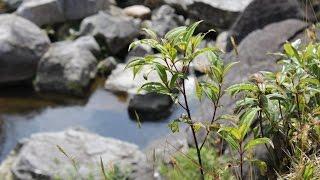 getlinkyoutube.com-Recorrido por reserva forestal Sur Oriente Antioqueño -Colombia- TvAgro por Juan Gonzalo Angel