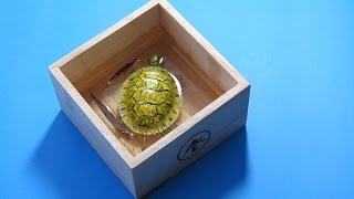 getlinkyoutube.com-Painting 3D Turtle in Resins