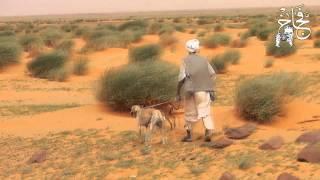 getlinkyoutube.com-الصيد بالكلاب السلوقية العربية في السودان