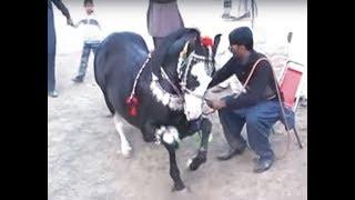 Harchahal /sakrila Sharif /Ghora Neelm Mirpur  Azad Kashmir. March 2012.part 3/3 width=
