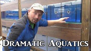 getlinkyoutube.com-Dramatic Aquatics - Shop under construction....
