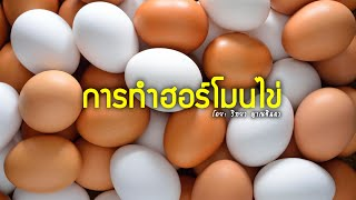 getlinkyoutube.com-การทำฮอร์โมนไข่