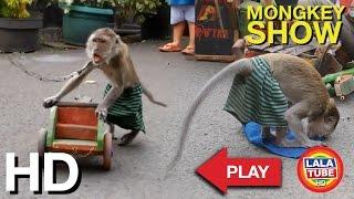 lala liat topeng monyet - Mongkey Show part 2