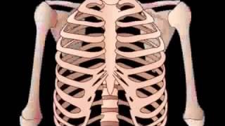getlinkyoutube.com-Skeletal System & Bone anatomy   physiology