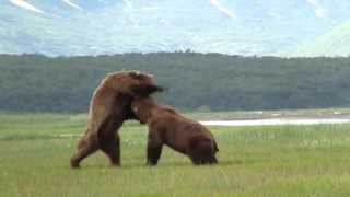 getlinkyoutube.com-Battle Of The Giant Alaskan Grizzlies, grizzly vs grizzly, alaska