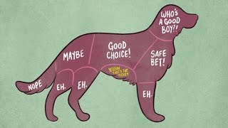 getlinkyoutube.com-How To Properly Pet Animals