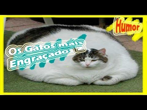 Os gatos de Estimação mais engraçados da internet 2
