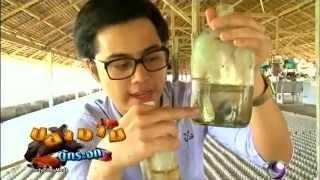 getlinkyoutube.com-Farm fish of Thai