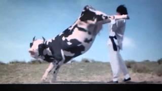getlinkyoutube.com-Jackie Chan fighting with a cow