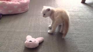 getlinkyoutube.com-【子猫】突然の異変。病気?どうなっちゃったの?