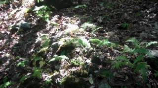getlinkyoutube.com-Watertown CT - Forgotten Grave of Joseph Scott Killed by Indians 1708