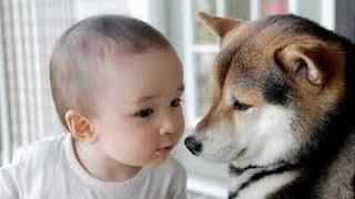 getlinkyoutube.com-【涙腺崩壊】飼い犬がしきりに息子の側に寄り添い震えていた。2歳児を救った『犬の訴え』に愕然とする