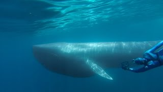 getlinkyoutube.com-GoPro: The Search for the Blue Whale - A Prelude to 'Racing Extinction'