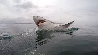 getlinkyoutube.com-Great White shark diving - South Africa