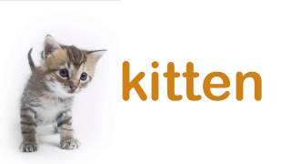 getlinkyoutube.com-Baby Flashcards: PET ANIMALS. Learning and stimulation for babies.