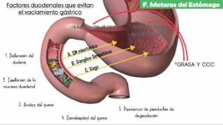 getlinkyoutube.com-Cap 63 : Propulsión y mezcla de los Alimentos en el tubo digestivo