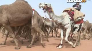 مسيرة منقية / عمر بن سعد المشوح الحربي