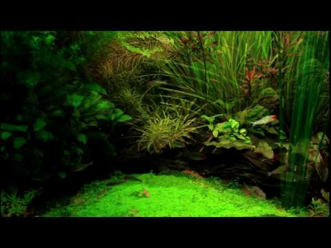 [HD 1080p]Amazon Tank 122 Gallons