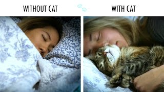 getlinkyoutube.com-Without Cat Vs. With Cat
