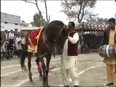 Ustad rabnawaz of bhachrawala with my horse perwaz