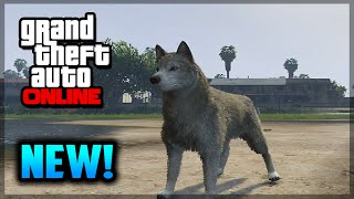 getlinkyoutube.com-GTA 5 PS4 - How To Play As A Dog - NEW Peyote Plant Location! (GTA 5 Gameplay)
