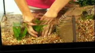 getlinkyoutube.com-TetraCare for Semi-Aquatic Turtle Environments