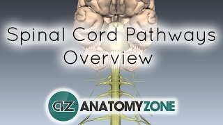 Spinal Pathways/Tracts - Part 2 - Ascending and Descending Tracts Overview - Anatomy Tutorial