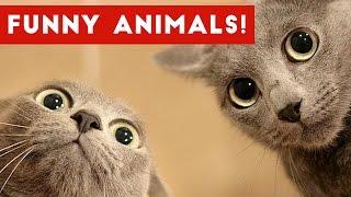 Funniest Pet Fails & Bloopers Compilation November 2016 | Funny Pet Videos