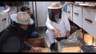getlinkyoutube.com-Lucrari de primavara la stupina cu 2 apicultori incepatori | Sfaturi utile de apicultura Apr 2010