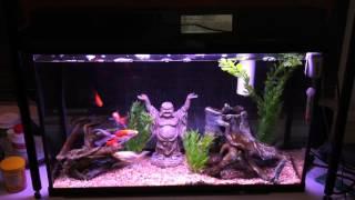 getlinkyoutube.com-Aquarium that requires NO water changes!