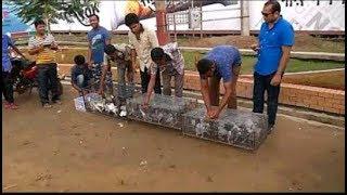 getlinkyoutube.com-কবুতর টুনামেন্ট মজার ভিডিও
