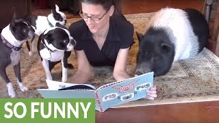 Pets gather around owner for story time