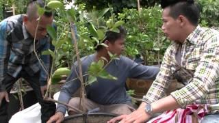 getlinkyoutube.com-รายการส่องเกษตร  ช่วงเกษตรมือทอง ตอน สร้างรายได้ด้วยการปลูกมะนาวในกระถาง