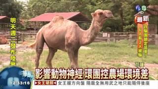 getlinkyoutube.com-北極狐快熱死 農場被控虐待!