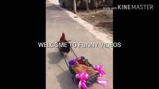 Utha le jaunga funny video