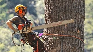 getlinkyoutube.com-STIHL chainsaws and crane used to take down huge dead White Fir tree in Forest Falls CA