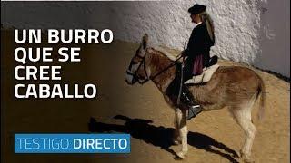 getlinkyoutube.com-Un burro que se cree caballo - Testigo Directo HD