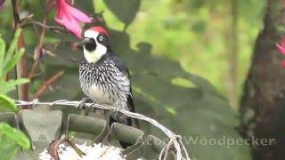 Costa Rica Birding Savegre River Valley