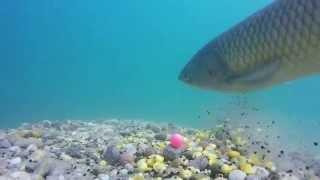 getlinkyoutube.com-My carp fishing