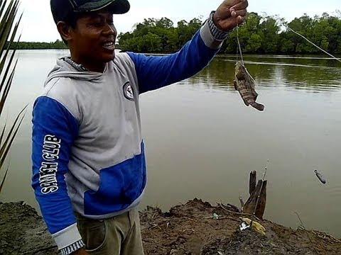 Memancing ikan kerapu bersama bapak Alas Iku Wono