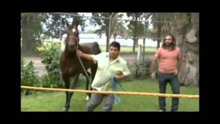 getlinkyoutube.com-Domador De Caballos - Allens Cash